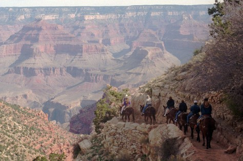 Image: Mule riders at the Grand Canyon