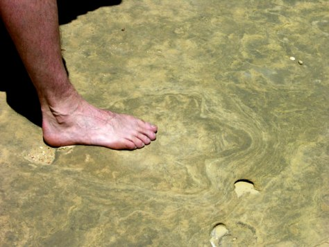 Image: Human foot over the footprint of a theropod