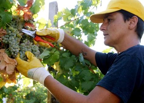 Image: Castello Banfi vineyard in Montalcino, Tuscany, Italy