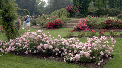Image: Rose garden at Elizabeth Park, Hartford, Conn.