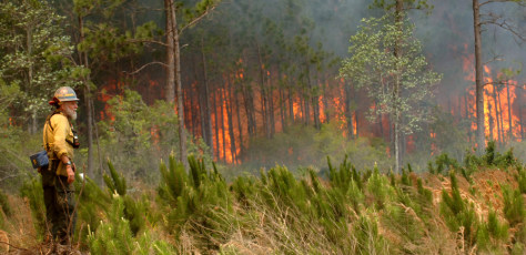IMAGE: Fire burns near Lake City, Fla.