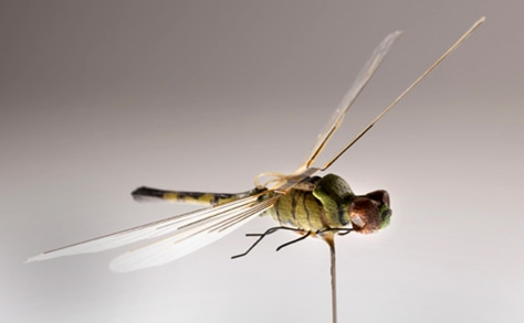 Image: Insectothopter