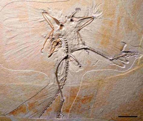 Image: Archaeopteryx