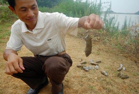 Farmer holds up a rat that he killed along the Dongting Lake in Yueyang
