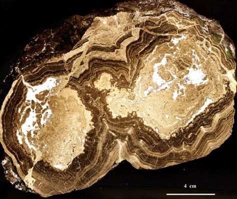 Image: 1.43 billion-year-old fossils