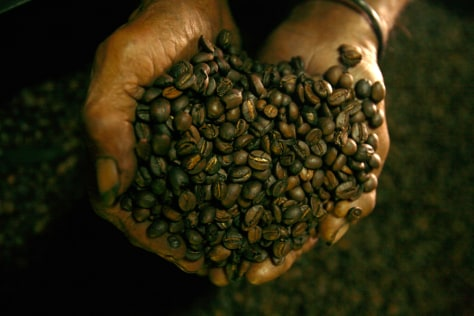 An East Timorese worker shows a dried coffee beans in Dili