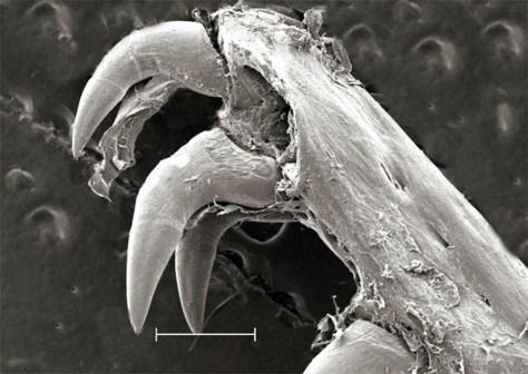 Image: Eel inner jaw