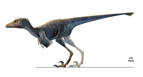 dinosaur personals Dinosaur bones have been dated by radiocarbon (carbon-14)  if dinosaurs have been extinct for 65 million  the discoverer of radiocarbon dating and nobel prize.