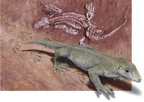 Image: One of oldest creatures to have footprints identified
