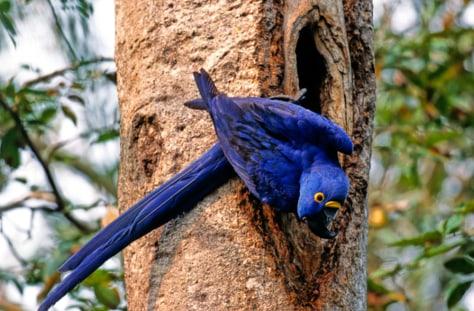 Image: The Amazon, Brazil