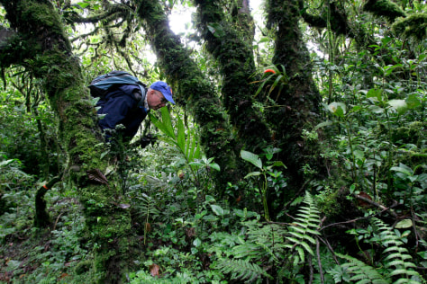 Image: Costa Rica