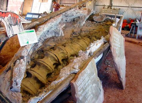 Argentina Dinosaur Bone