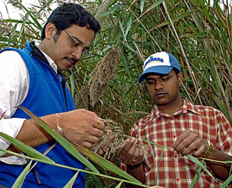IMAGE: RESEARCHERS WITH PHRAGMITES PLANT