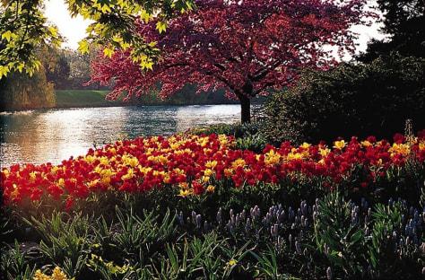 Image: Chicago Botanic Garden