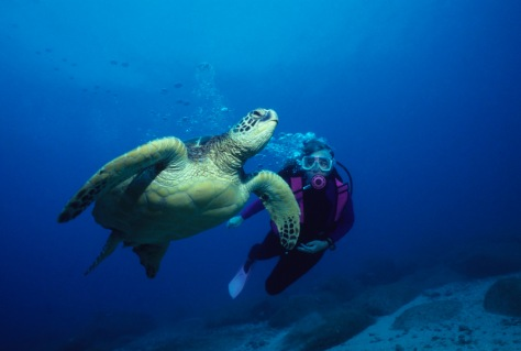 Image: Sea turtles, The Galapagos Islands