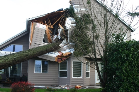 IMAGE: Tree crashed into house