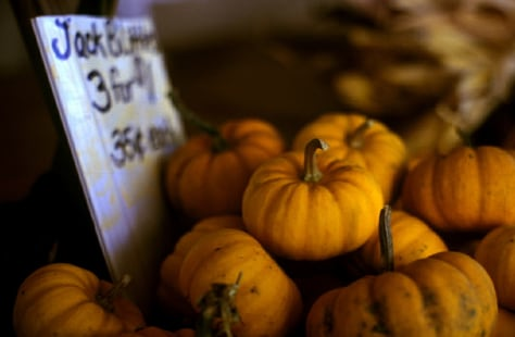 Image: Pumpkins for sale at the Vanvoorhis Farm- Pittsford NY