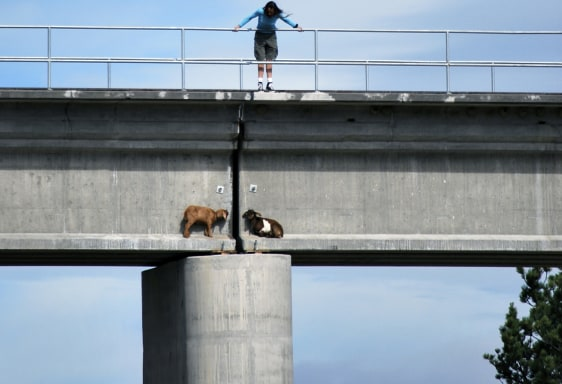 Image: Goats stranded on an overpass