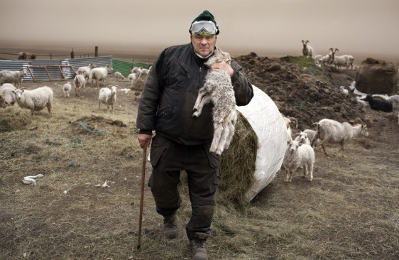 Image: Icelandic farmer coping with volcanic ash