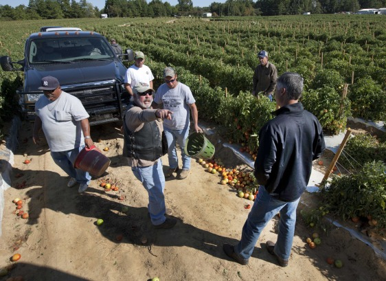Image: tomato farmer Leroy Smith, second from left, talks with State Sen. Scott Beason