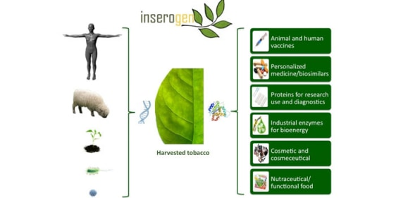 Image: Tobacco plants vaccine chart