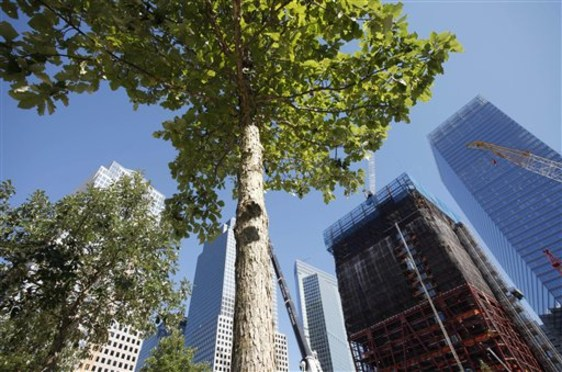 Image: Trees at World Trade Center