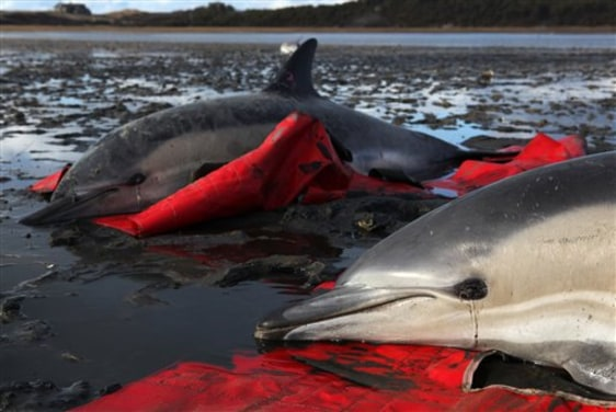Image: Stranded dolphins