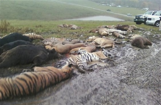 Image: Carcasses of animals shot dead by sheriff's deputies