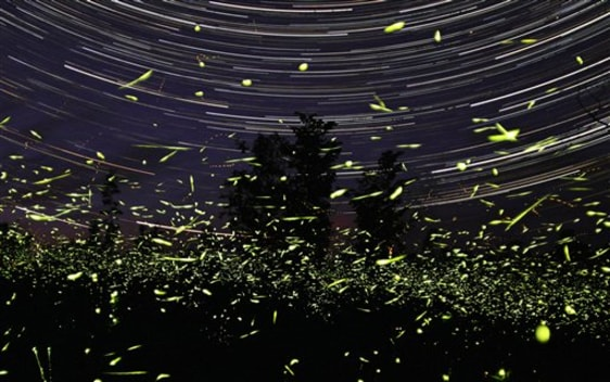 Image: Fireflies in Canada