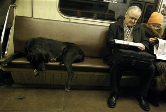 Image: Dog on subway train