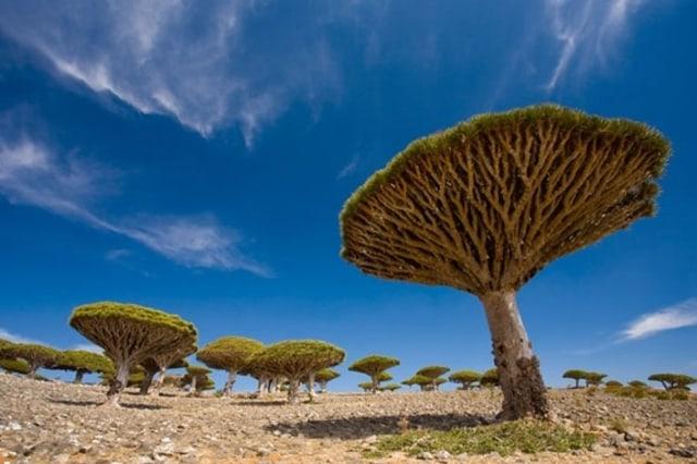 Image: Socotra Archipelago, Yemen