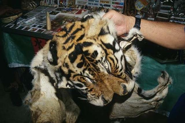Image: Tiger skin