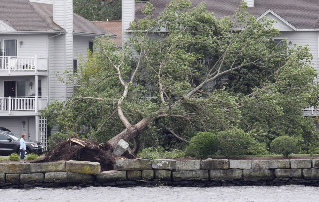 Image: Fallen tree in Rhode Island