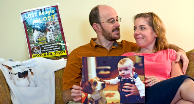 Image: Jeff Abramson and Beth Edinger of Takoma Park, Md., have been looking for their lost beagle, Sassafras, for more than five months.