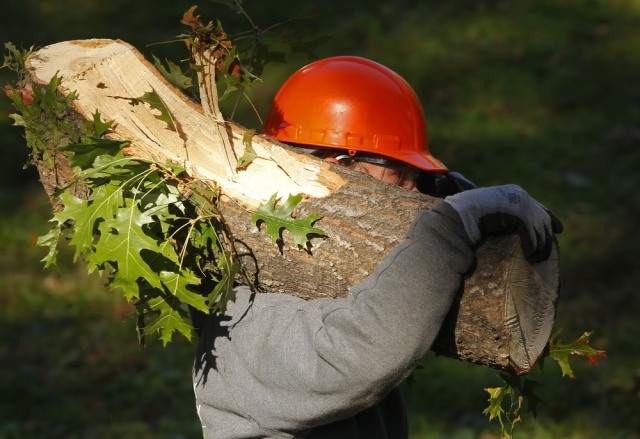 Image: A worker clears logs in New York's Central Park
