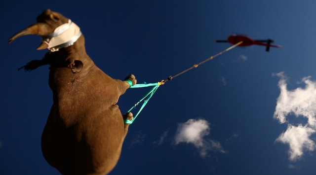 Image: Black rhino airlifted