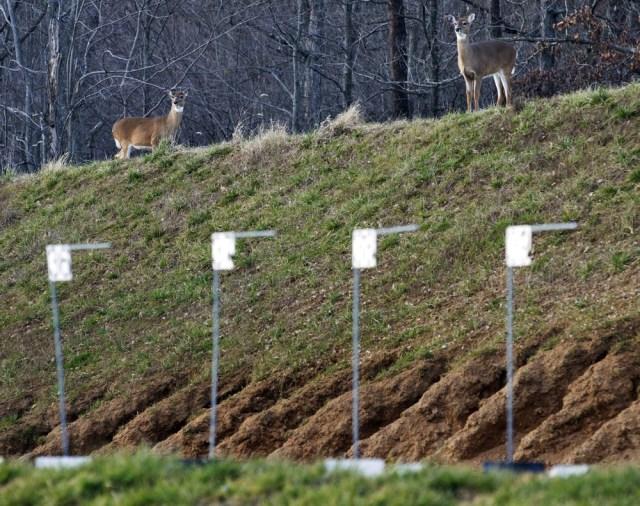 Image: Deer roam on berm above FBI firing range