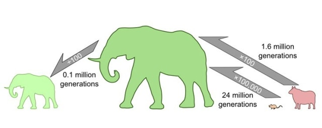 Image: Evolution chart
