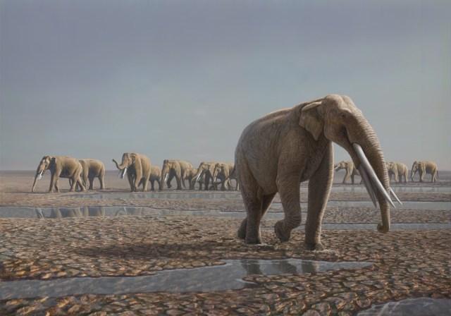 Image: Elephant herd