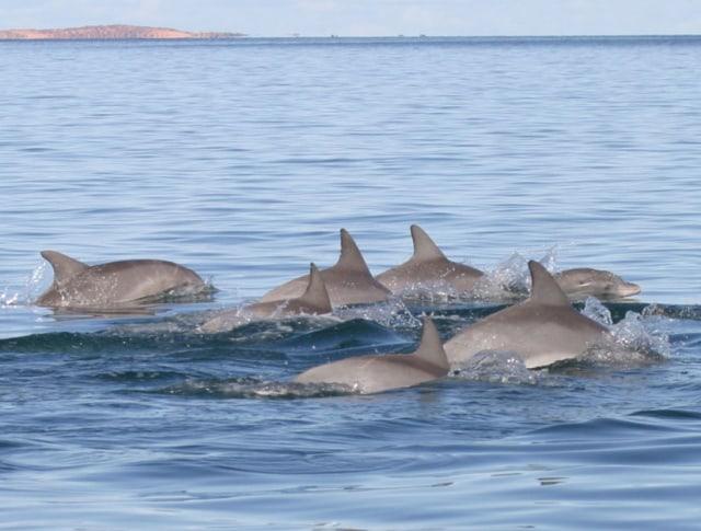 Image: Dolphin society