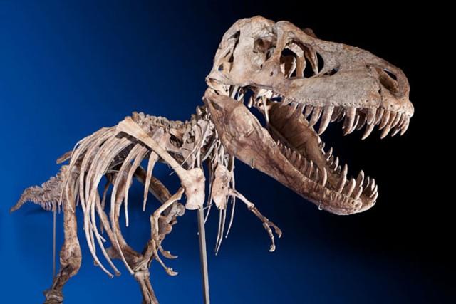 Image: Tarbosaurus bataar skeleton