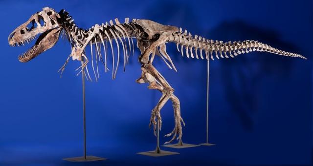 Image: Tyrannosaurus bataar