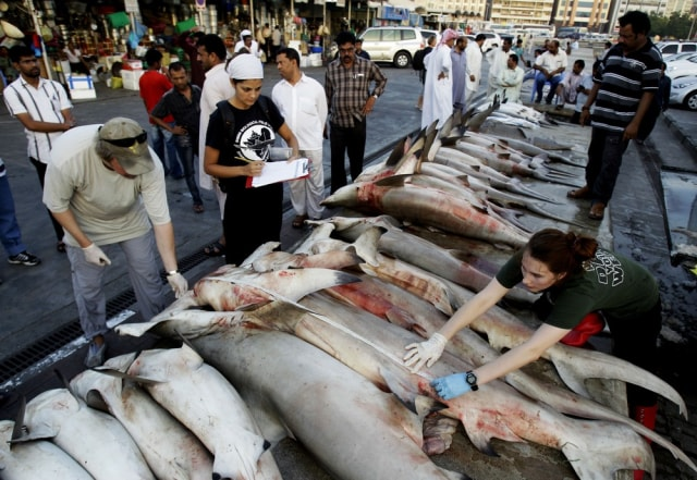Image: Sharks at Dubai fishmarket