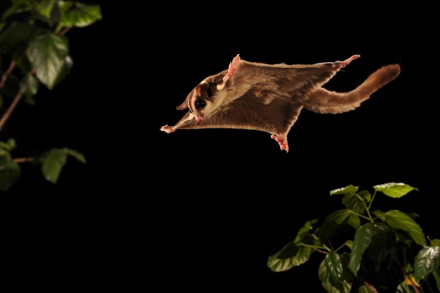 Critters caught on a high-speed camera - Technology & science ...