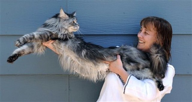 Image: Stewie, world's longest cat, and co-owner, Robin Hendrickson