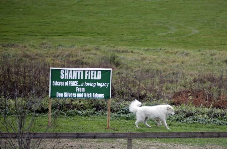 Activists go undercover to thwart puppy mills - Health - Pet health
