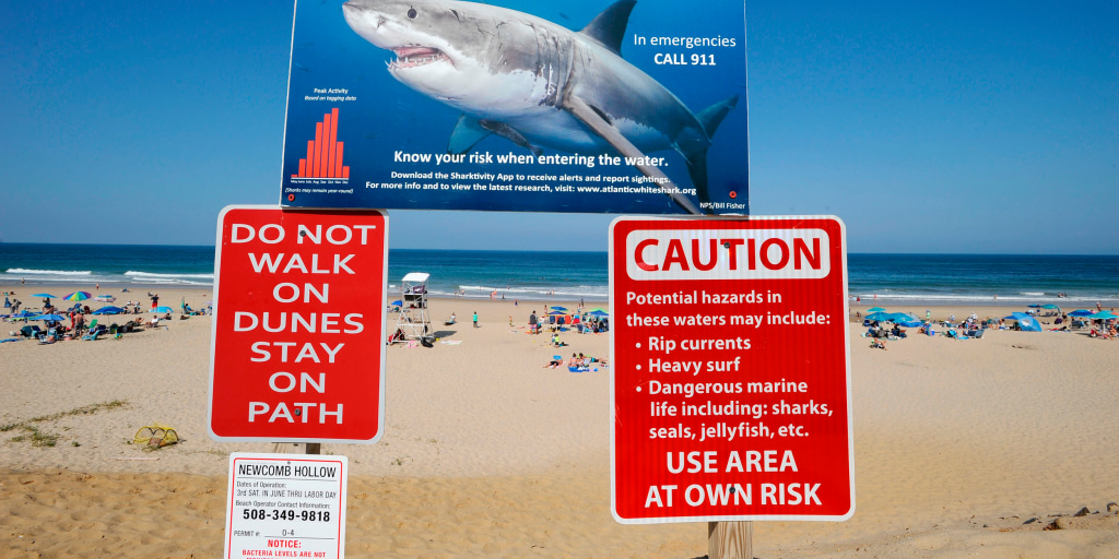 More than 150 great white shark sightings logged off Cape