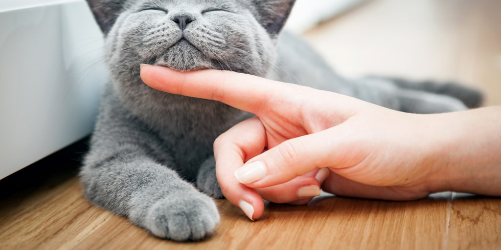 Your cat may be a jerk but it really does love you, according to science