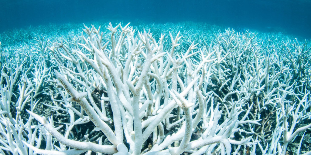 Great Barrier Reef hit by third major bleaching event in five years