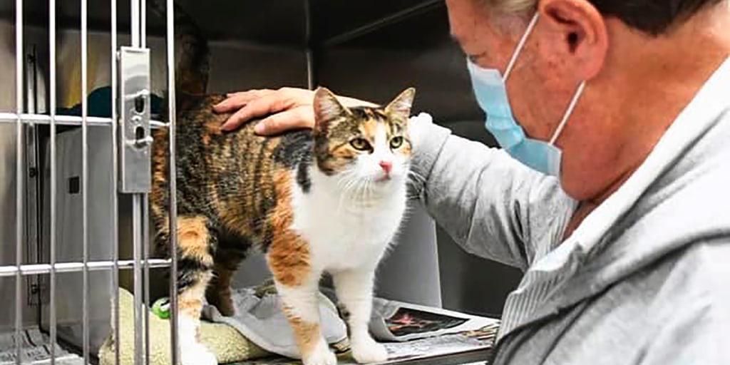 Pet cat feared dead in 2018 California mudslide is found alive - NBC News